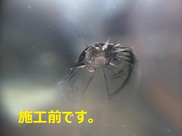 IMG_5264[1]
